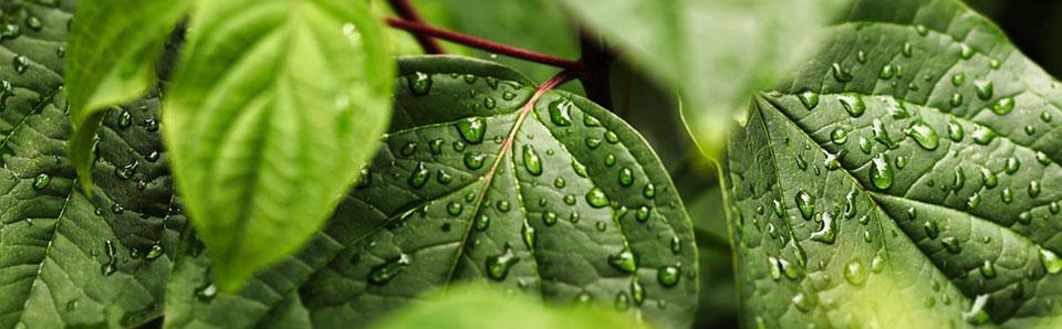 L'installation d'un système de récupération d'eau de pluie pour le jardin
