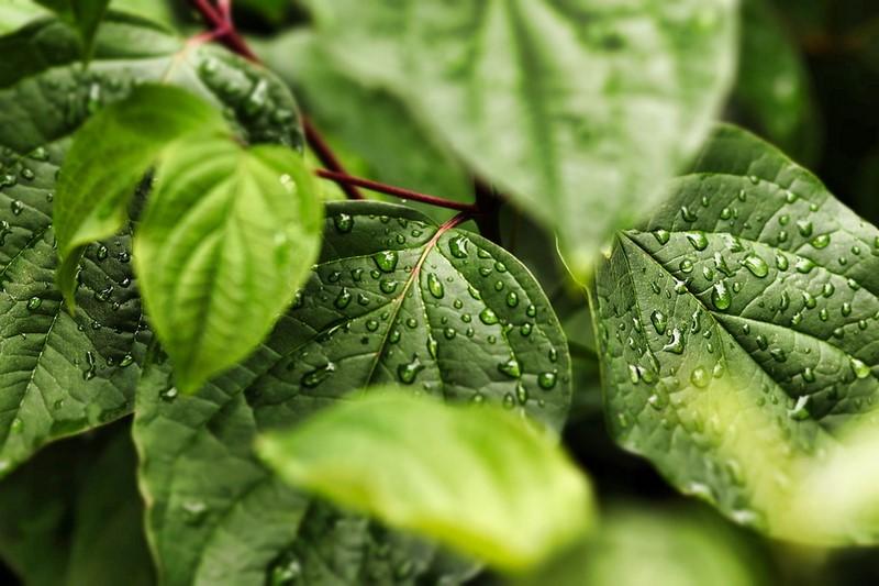 Eau de pluie pour le jardin