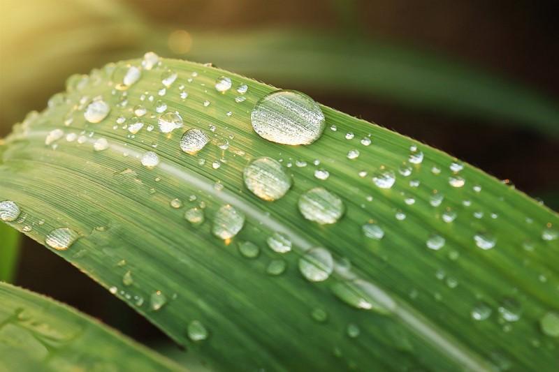 eau de pluie jardin avec Ovalo