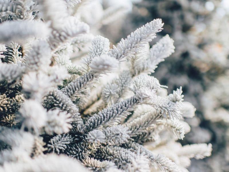 L'hiver au jardin : préparation et soin de son jardin
