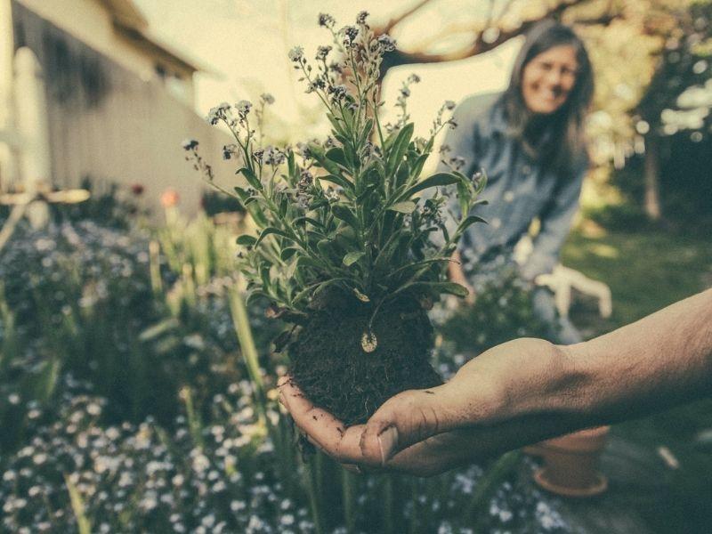 Le jardin face au défi climatique