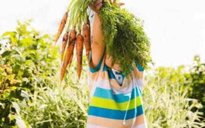 L'apprentissage au jardin : les activités pour les enfants