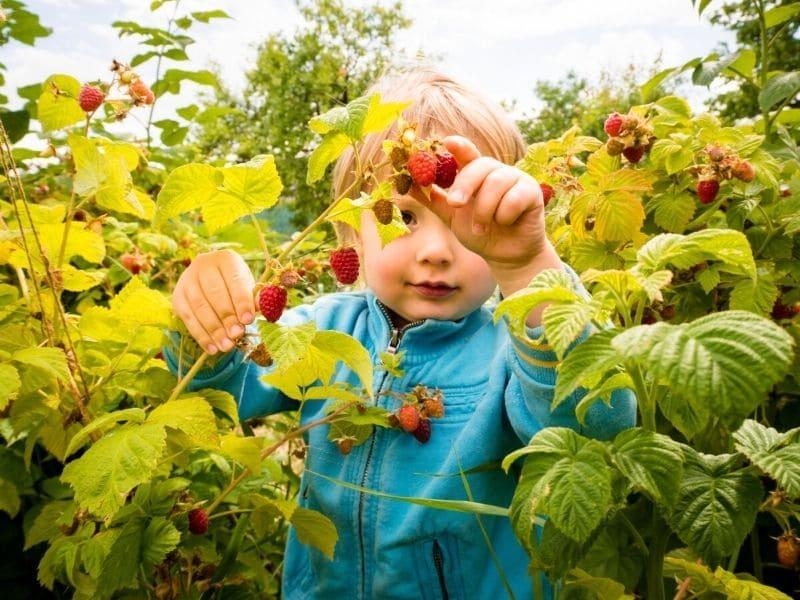 jardin eau de pluie valeurs nature enfants