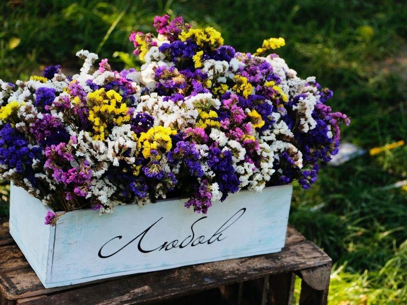 Fleurir & arroser son jardin en été