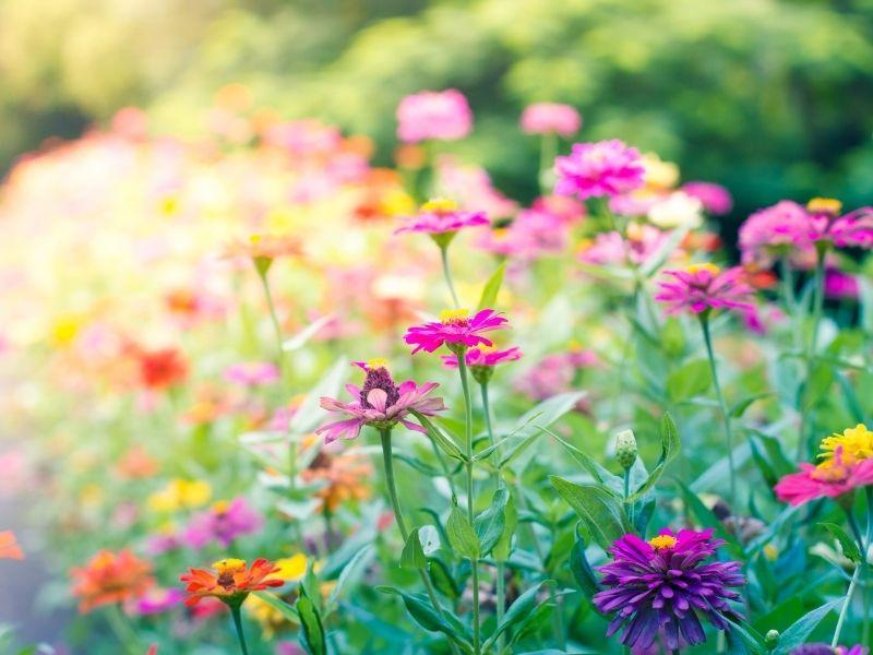 fleurs été eau de pluie jardin