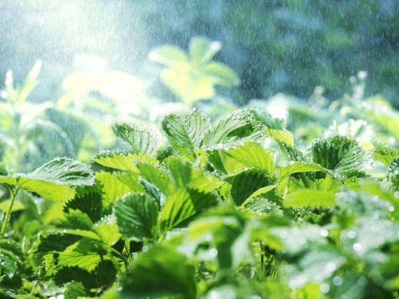 La filtration d'eau de pluie pour le jardin