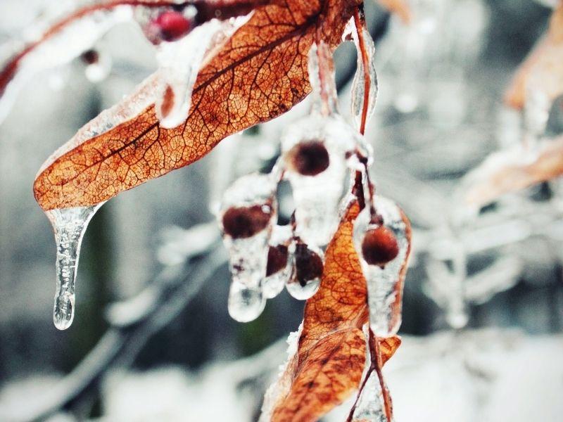 La citerne d'eau de pluie et le risque de gel en hiver